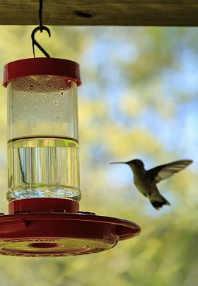 Red hummingbird bird feeder and a small hummingbird flying up to it with trees in the background.