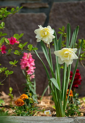 Close up of a flower garden with white and yellow easter lillies and bright pink and red flowers in the background.