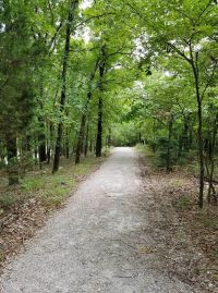 gravel trail through a canopy of trees
