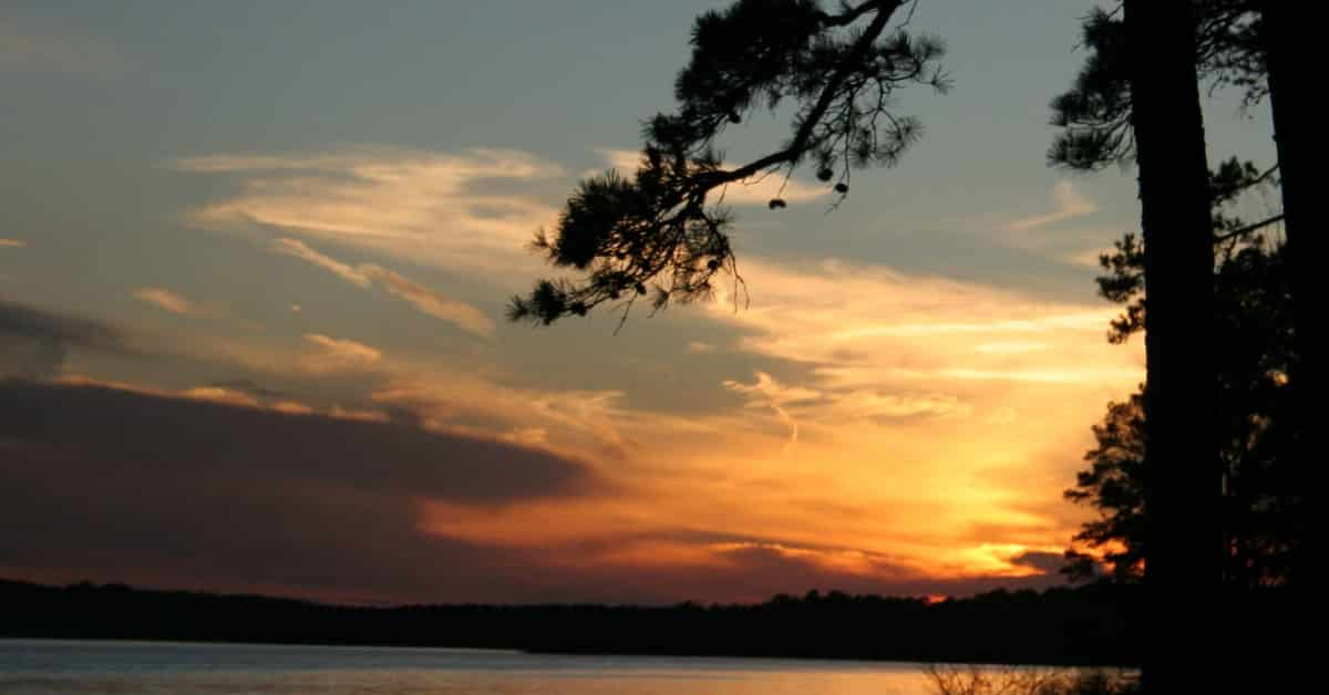 sunset on lake with a pine tree branch in the foreground